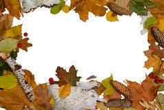 Geïsoleerdew de herfstbladeren Royalty-vrije Stock Afbeeldingen