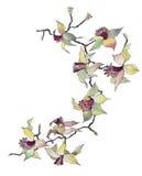 Geïsoleerdew de tak van de orchidee Stock Fotografie