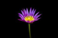 Geïsoleerdew lotusbloembloem Royalty-vrije Stock Foto's