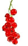 Geïsoleerdew rode aalbes Royalty-vrije Stock Foto
