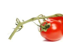 Geïsoleerdew verse tomaat Stock Afbeelding
