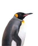 Geïsoleerdez keizerpinguïn met het knippen van weg Stock Foto