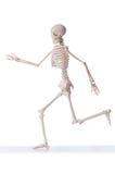 Geïsoleerdg skelet Stock Fotografie