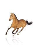 Geïsoleerdi paard Stock Fotografie