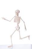 Geïsoleerdi skelet Stock Foto