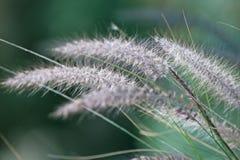 Geïsoleerdj gras op groene achtergrond royalty-vrije stock afbeelding