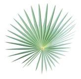 Geïsoleerdl palmblad Royalty-vrije Stock Foto