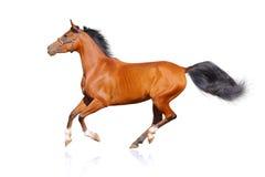 Geïsoleerdn paard Stock Foto's