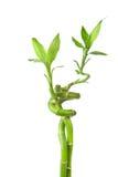 Geïsoleerdr bamboe stock foto