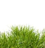 Geïsoleerdr Gras Stock Afbeelding