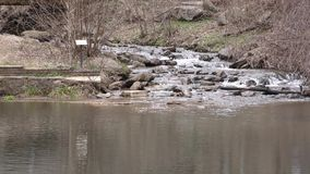 Geórgia, Amicalola cai, a cachoeira que pequena os fluxos na reflexão se associam video estoque