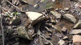 Geórgia, Chattahoochee River, fim acima da angra, de rochas e de sons pequenos do pássaro vídeos de arquivo