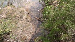 Geórgia, ilha Ford Park, a angra pequena como flui no Chattahoochee River vídeos de arquivo