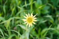 Geöffnete Blume lizenzfreie stockfotos