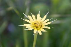 Geöffnete Blume Stockfotografie