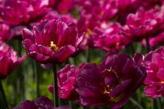 Geöffnete Blumen Stockfoto
