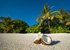 Geöffnete Kokosnuss auf dem sandigen Strand von Tropeninsel Stockfoto