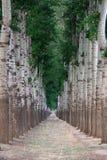 Geöffnete Straße des Baums Stockfotos