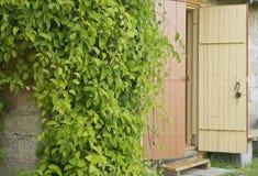 Geöffnete Tür und Rebe auf der Wand Lizenzfreie Stockfotos