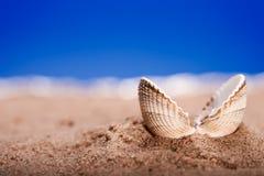 Geöffneter Seeshell Seashell auf Strandsand lizenzfreies stockfoto