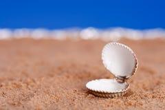 Geöffnetes Seeshell auf Strandsand und blauem Himmel Lizenzfreies Stockfoto