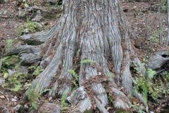 Âge de temps de la vie d'arbre photographie stock