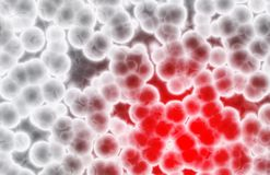 ge ? första erfarenh ? röd white för celler Arkivbilder