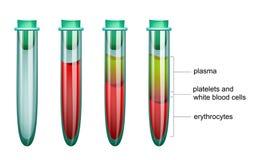 Ge första erfarenhet i provröret, plasmaet och erythrocytes royaltyfri illustrationer