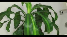 Ge Houseplant per dusch lager videofilmer