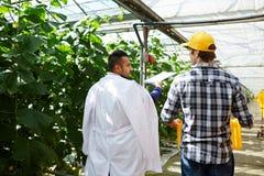 Ge rekommendationer till växthusarbetaren royaltyfri fotografi