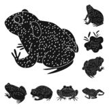 Ge?soleerd voorwerp van fauna en reptielpictogram Inzameling van fauna en anuran vectorpictogram voor voorraad royalty-vrije illustratie