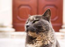 Geacclimatiseerde Kat royalty-vrije stock foto's