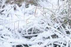 A geada branca cobre a grama verde Foto de Stock Royalty Free