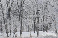 A geada branca cobriu árvores Imagem de Stock Royalty Free