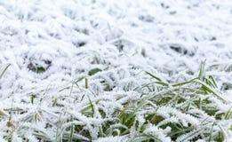 A geada branca fresca cobre a grama verde Imagens de Stock Royalty Free