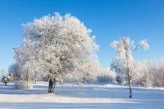 A geada cobriu árvores Fotos de Stock Royalty Free