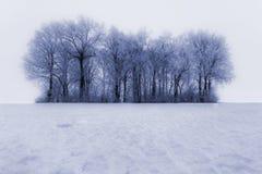 A geada cobriu árvores no inverno imagem de stock royalty free