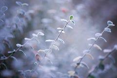 A geada cobriu as folhas Fotografia de Stock Royalty Free