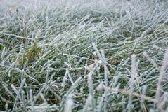 Geada da grama Imagem de Stock
