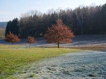 Geada da manhã no prado e nas árvores no outono imagens de stock
