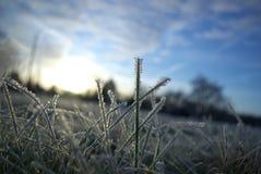 Geada da noite no inverno Fotos de Stock