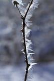 Geada do gelo no inverno fotografia de stock royalty free