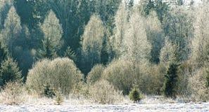 Geada do Hoar na luz solar Fotografia de Stock Royalty Free