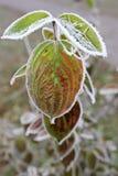 Geada do inverno fotos de stock