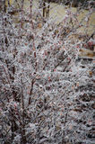 Geada do inverno Fotos de Stock Royalty Free