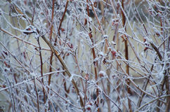 Geada do inverno Foto de Stock Royalty Free