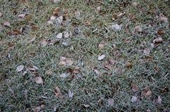 Geada do inverno Fotografia de Stock