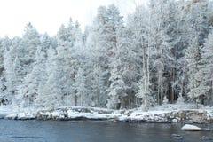 Geada e paisagem da floresta fotos de stock