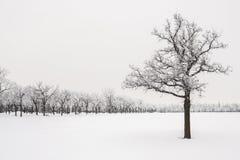 Geada em árvores Imagem de Stock