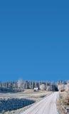 Geada em um winterday ensolarado  Fotos de Stock Royalty Free